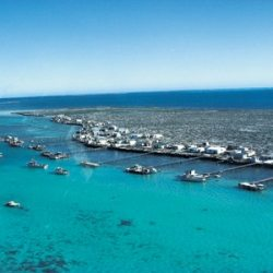 Abrolhos boast an incredible range of marine life